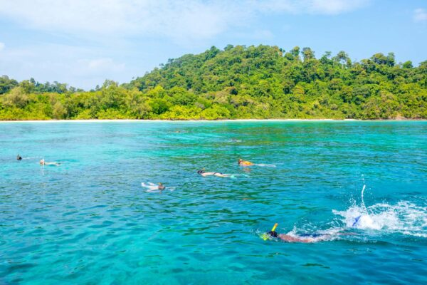 Excursion_Reef Safari