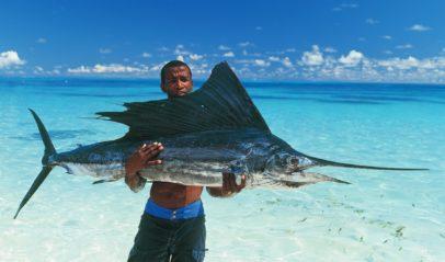 Sail Fish | Mason's Travel Fishing