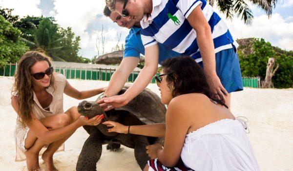Masons Travel DMC Seychelles_Giant Tortoise